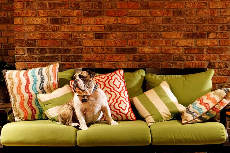 Upholstery Odor Removal In Brooklyn Ny