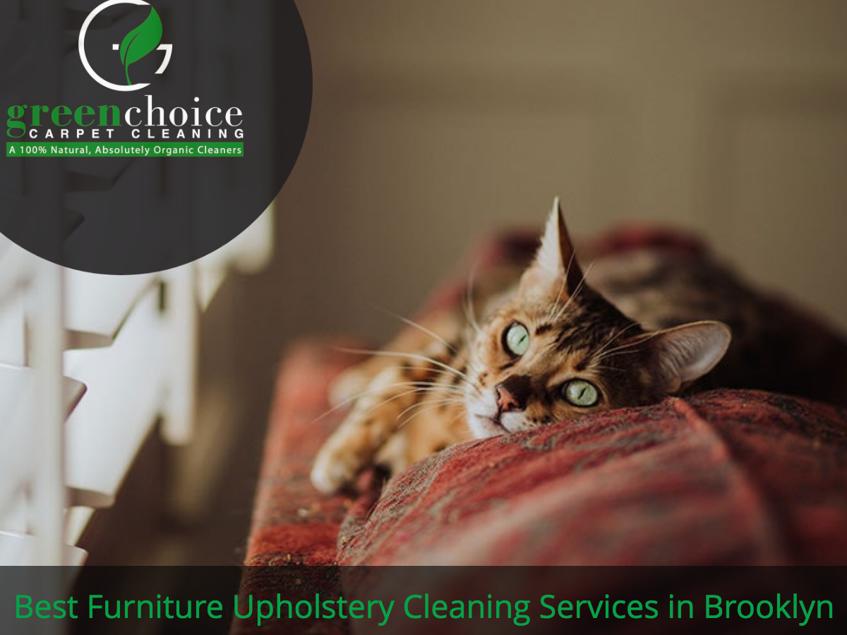 Best Furniture Upholstery Cleaning Services