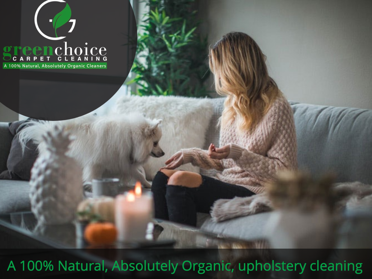 Absolutely Organic CARPET CLEANERS NYC